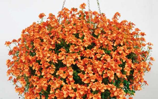 Beet Und Balkonpflanzen Gartenbau Robin Schonfeldt